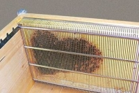 Cage d'isolation simplifiée anti-varroa dadant