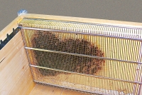 Simplified confinement cage for Langhstroth beehive